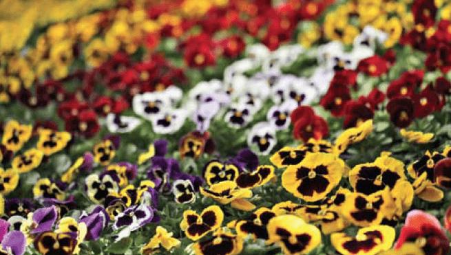 Рабатки в цветнике
