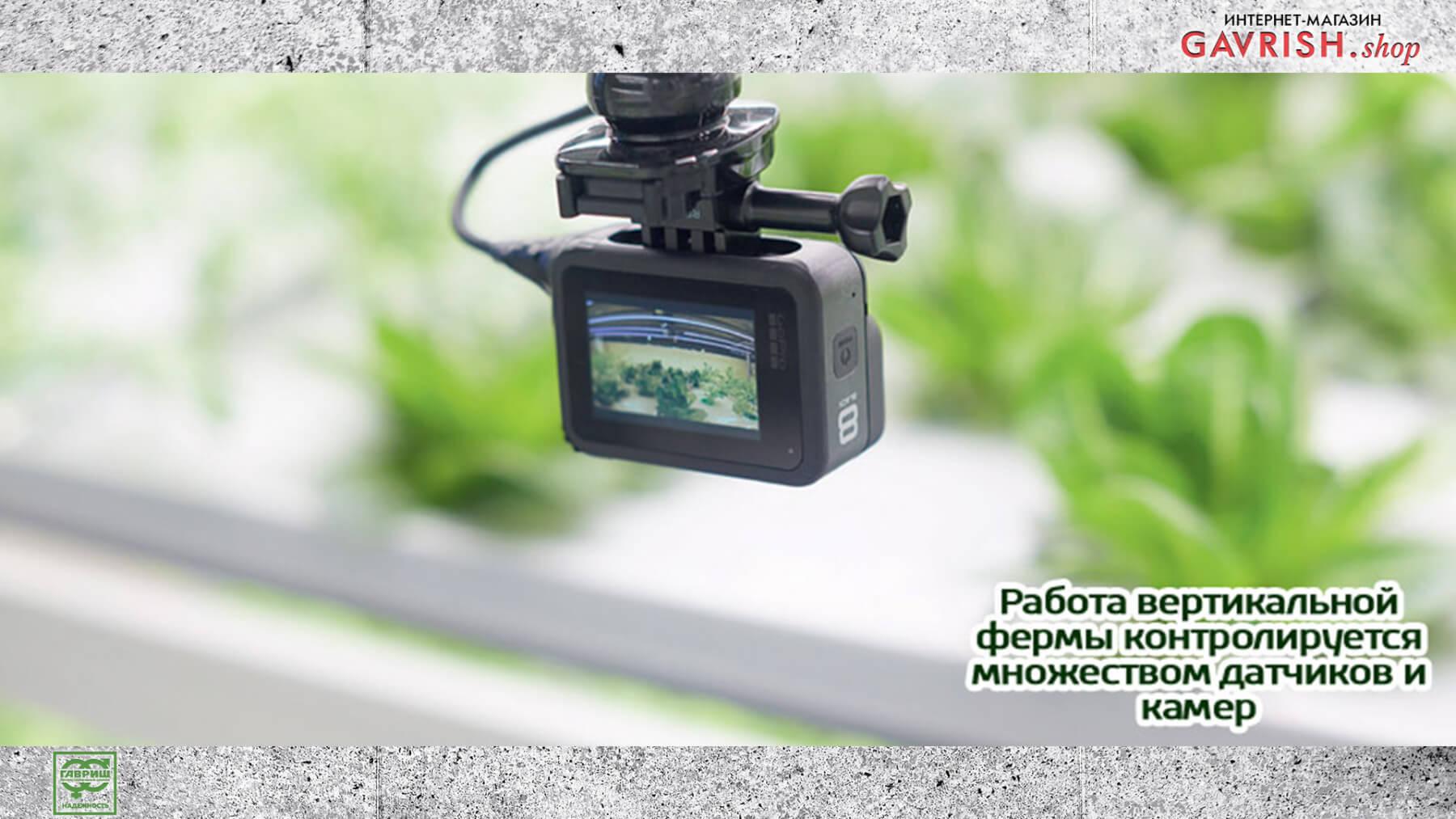 Работа вертикальной фермы контролируется датчиками и камерами. Фото: Ника Селезнева