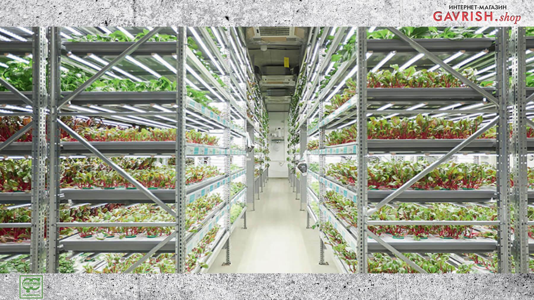 Вертикальные фермы — решение для выращивания овощей рядом с потребителем. Фото: Ника Селезнева